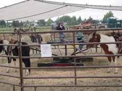 Portland events pony carousel. Ponies for rides.