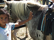 Photo of youngster petting one of our riding ponies.